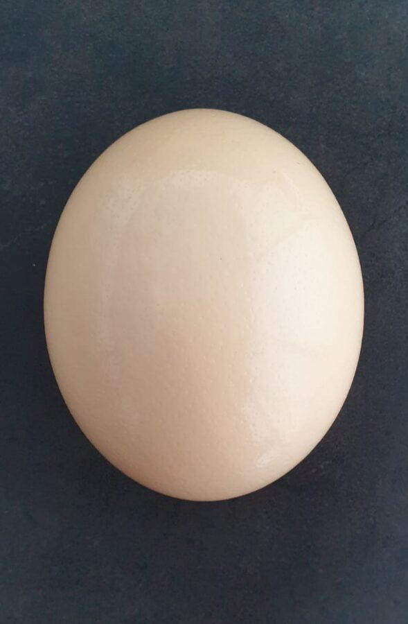 Strausa ola