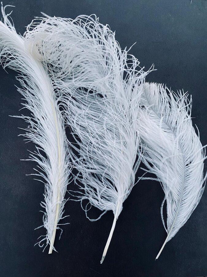 Strausu spalvas, baltas